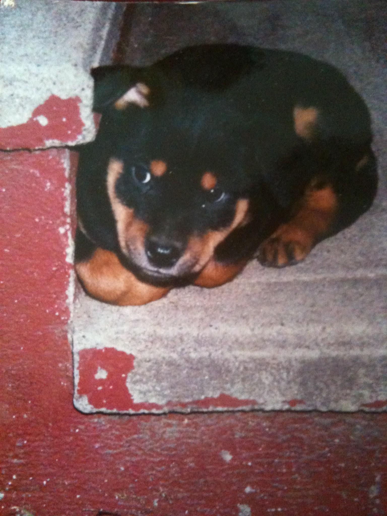 Puppy Love- Wordless Wednesday