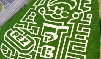 The Most Amazing Corn Mazes
